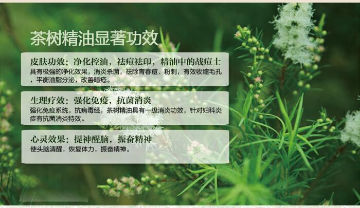 茶树精油的使用方法有哪些?